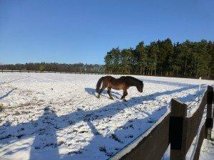 Nikki im Schnee